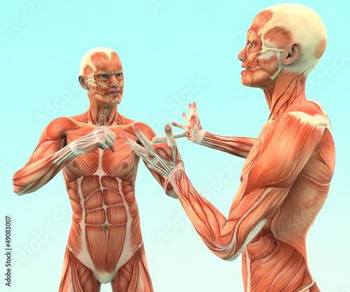 Human sex organs pdf