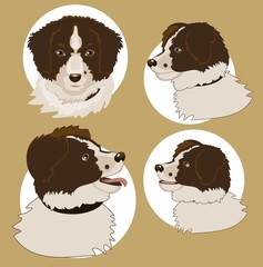 Four heads of the  dog
