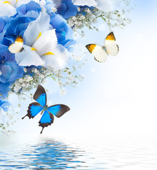 Fototapete - Flowers and butterfly, blue hydrangeas and white irises