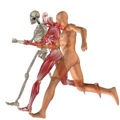 Papiers peints Chevaliers High resolution conceptual human for anatomy,medicine, health