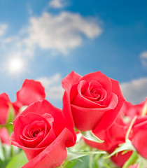 Red roses flowers on blurred sky  background.