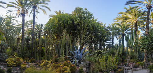 Palm tree garden in Elche, Spain