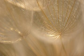 Fotorolgordijn Paardebloemen en water Abstract colorful dandelion seeds with shallow depth of field
