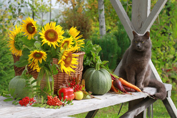 Still life with a cat.