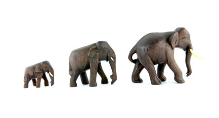 family elephants isolated on a white background