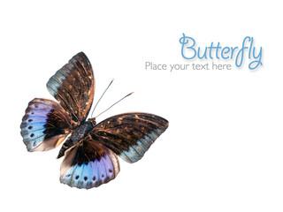 Blauer Schmetterling mit Textfreiraum