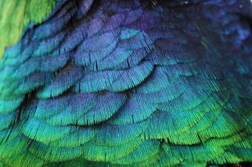Fototapeta pióro tło kolor