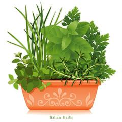Italian Herb Garden Oregano Chives Sweet Basil Parsley Rosemary