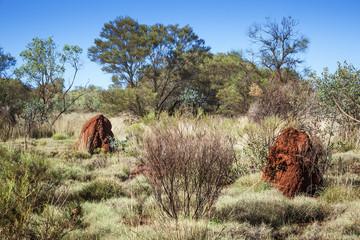 australia termite hill