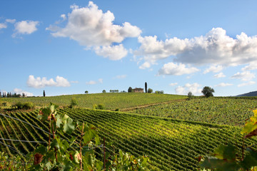 Wall Mural - Chianti vineyard landscape in Tuscany, Italy