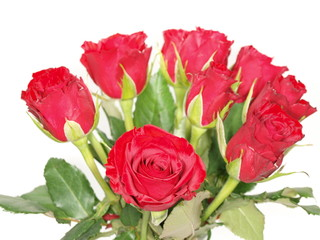 Red roses, isolated towards white background