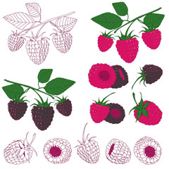 Set of raspberry and blackberry