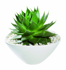 Kaktus in der Schale weiss