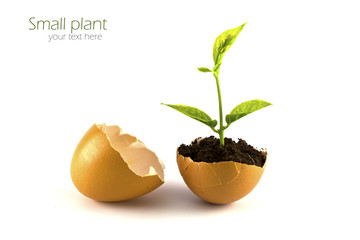 Growing green plant in egg shell isolated on white background.