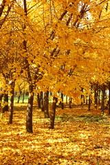 gloden leaves
