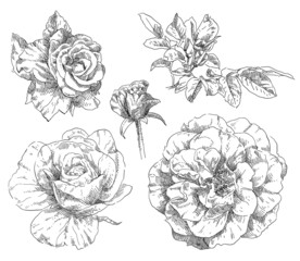 Hand drawing flower blossom