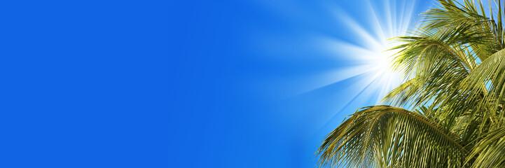 Papiers peints Palmier Header soleil et palmier fond ciel bleu
