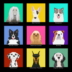 The Dog Collection 01