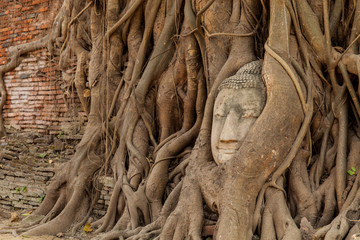 buddha head in the tree