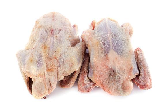 partridge meat