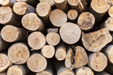 Brennholz  Holzstamm Baum