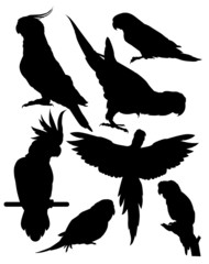vector silhouettes of parrots