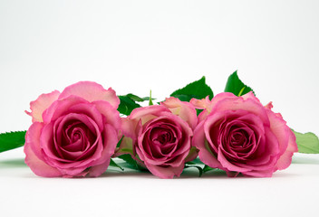 Three pale pink roses.