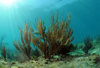 Wall Mural - underwater seascape with gorgonia