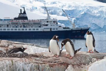 Aluminium Prints Antarctic Eselspinguine (pygoscelis papua) vor Kreuzfahrtschiff