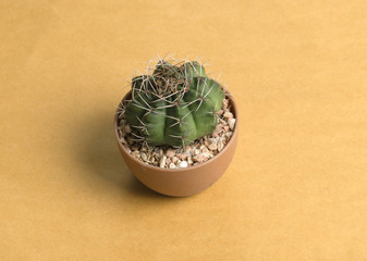 small cactus on vintage background