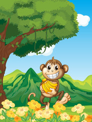 A monkey holding a banana in the forest