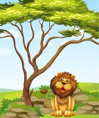 A lion sitting under a big tree