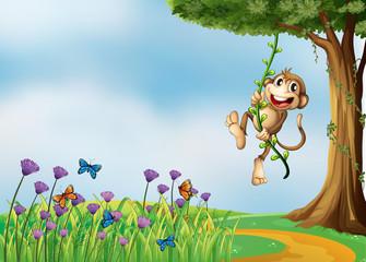 Keuken foto achterwand Vlinders A monkey hanging on a vine plant