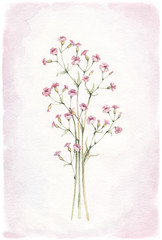 Watercolor flowers. Perfect for greeting card