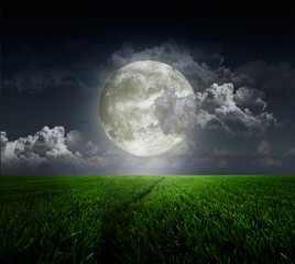 Meadow  abd moon