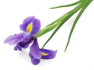 Fond de hotte en verre imprimé Iris Purple iris flower, isolated on white