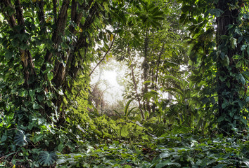 Green tropical rain forest with light shine through