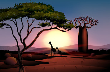 Giraffes in the dessert
