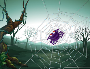 A spiderweb in the woods