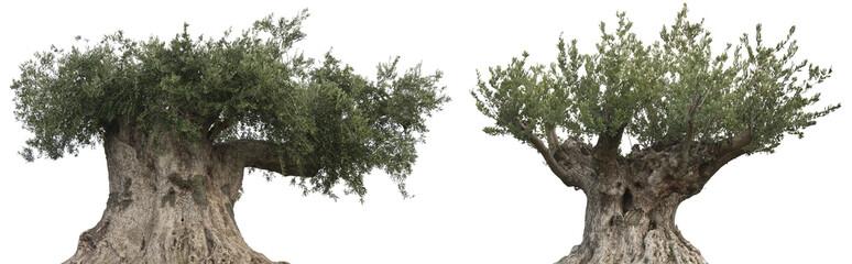 Photo sur Toile Oliviers oliviers