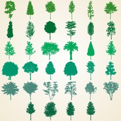 Trees silhouettes, set of various detailed trees illustrations
