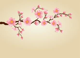 Cherry blossom backgound.