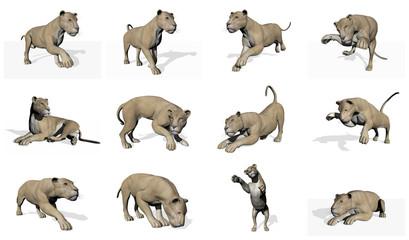 Lioness set - 3D render
