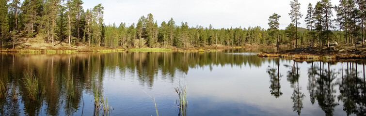 Summer view of wood lake in silent sunny day with reflections