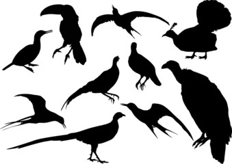 ten isolated different bird silhouettes