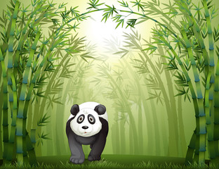 In de dag Beren A panda bear and a bamboo forest