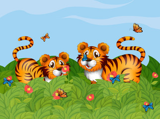 Two tigers playing in the garden