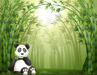 Canvas Prints Bears A panda bear and bamboo forest