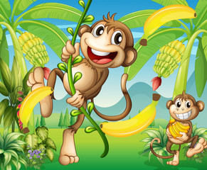 Two monkeys near the banana plant