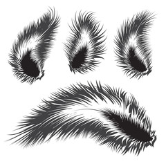 Set of vector feather silhouettes